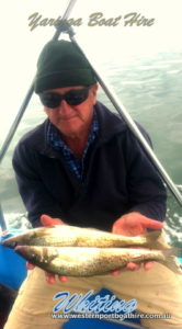 Yaringa Boat Hire whiting fishing western port bay melbourne
